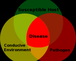 Plant_Disease_Triangle.news3