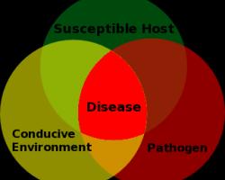 Plant_Disease_Triangle.news3